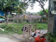 Brgy Putik, Ramos Drive, Zamboanga City Vacant Lot For Sale