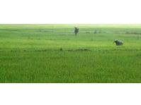 Burgos, Ilocos Norte Farm Lot for Sale 012010